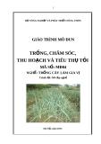 Giáo trình Trồng, chăm sóc, thu hoạch và tiêu thụ tỏi - MĐ04: Trồng cây làm gia vị