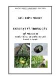 Giáo trình Ươm hạt và trồng cây - MĐ02: Trồng dưa hấu, dưa bở