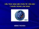 Bài giảng Cấu trúc sinh học phân tử của HBV và ý nghĩa trong lâm sàng - Đặng Thị Nga