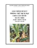 Giáo trình Phòng trừ dịch hại cho cây chuối - MĐ04: Trồng chuối
