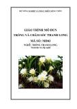 Giáo trình Trồng và chăm sóc thanh long - MĐ03: Trồng thanh long