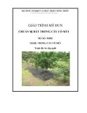 Giáo trình Chuẩn bị đất trồng cây có múi - MĐ02: Trồng cây có múi