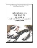 Giáo trình Bảo quản cá - MĐ06: Câu vàng cá ngừ đại dương