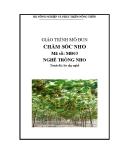 Giáo trình Chăm sóc nho - MĐ03: Trồng nho