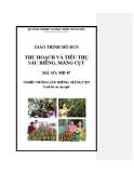 Giáo trình Thu hoạch và tiêu thụ sầu riêng, măng cụt - MĐ07: Trồng sầu riêng, măng cụt