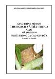 Giáo trình Thu hoạch và tiêu thụ ca cao - MĐ04: Trồng ca cao xen dừa
