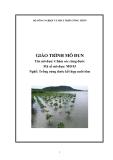 Giáo trình Chăm sóc rừng đước - MĐ04: Trồng rừng đước kết hợp nuôi tôm
