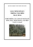 Giáo trình Trồng táo mèo - MĐ04: Trồng cây lâm sản ngoài gỗ song, mây trám trăng táo mèo