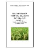 Giáo trình Trồng và chăm sóc cây lúa cạn - MĐ02: Trồng lúa cạn