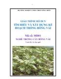 Giáo trình Tìm hiểu và xây dựng kế hoạch trồng bông vải - MĐ01: Trồng cây bông vải