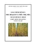 Giáo trình Thu hoạch và tiêu thụ mía - MĐ05: Trồng mía đường