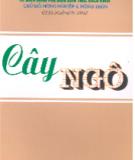 Ebook Cây ngô: Phần 1 - GS.TS. Ngô Hữu Tình