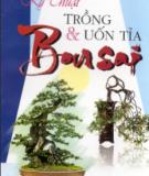 Nghệ thuật trồng và uốn tỉa Bonsai: Phần 1