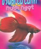 Kinh nghiệm nuôi cá cảnh nước ngọt: Phần 2