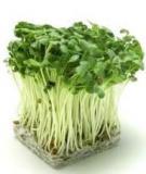 Tài liệu Hướng dẫn trồng rau mầm tại nhà