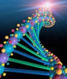 Chuyên đề: Phương pháp giải bài tập về hoán vị gen - THPT Hậu Lộc 3