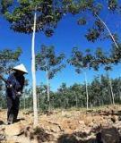 Khả năng giữ nước, bốc và thoát hơi nước của rừng trồng cao su (Hevea Brasiliensis) ở vùng Bắc Trung bộ