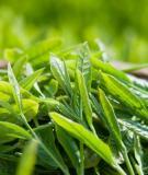 Cách trị mụn cám, mụn bọc hiệu quả bằng các loại lá cây