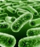 Đề tài: Các nhóm vi sinh vật gây bệnh thường gặp trong môi trường nước. Vi sinh vật chỉ thị, ý nghĩa của vi sinh vật chỉ thị