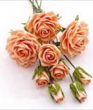 Cách làm hoa hồng bằng giấy nhún đẹp