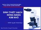Bài giảng Sinh thiết hạch nông bằng kim nhỏ - ThS.BS. Nguyễn Thị Bích Ngọc