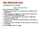 Bài giảng Mông đùi sau - CBG. Nguyễn Thị Thanh Phượng