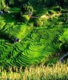 Bài tập 2: Bài thơ Việt Bắc