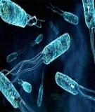 Kiểm soát vi khuẩn gây hại trên bề mặt mềm tại gia đình