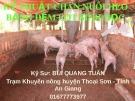 Bài giảng Kỹ thuật chăn nuôi heo trên đệm lót sinh học - KS. Bùi Quang Tuấn