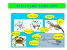 Bài giảng Quản lý chất lượng nước