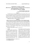 Ảnh hưởng của phân ủ từ rơm (phế thải của việc sản xuất nấm rơm) có xử lí Trichoderma đến sinh trưởng và năng suất của 2 giống lúa MTL560 và IR50404
