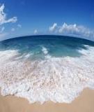 Tiểu luận: Thực trạng ô nhiễm môi trường biển Việt Nam và một số nguyên nhân gây ra thực trạng đó