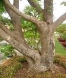 Bài 4: Hình thái, cấu tạo giải phẩu và chức năng của thân cây