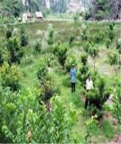 Nghiên cứu thực trạng phát triển trang trại ở tỉnh Đồng Nai giai đoạn 2001 - 2008 (Nguyễn Thị Bình)