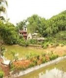 Phát triển kinh tế trang trại ở thành phố Hồ Chí Minh - Lã Thúy Hường