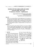 Nghiên cứu tính kháng khuẩn của nhóm Flavonoids được tách chiết từ Sambucus chinensis L. Caprifoliaceae