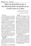 Nghiên cứu thành phần hóa học và hoạt tính sinh kháng khuẩn của tinh dầu rau má (Centella asiatica (L.) Urban)