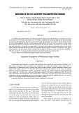 Nhân dòng vô tính cây lan Hồ điệp Phalaenopsis Sogo Yukidian