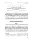 Ảnh hưởng của tuổi và kích cỡ đến khả năng sinh sản của tôm chân trắng (Litopenaeus vannamei) bố mẹ sạch bệnh