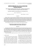 Chuyển gen kháng sâu cry1Ab, cry1B-cry1Ab vào cây mía (Saccharum officinarum L.)