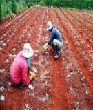 Biện pháp xử lý đất do kí sinh trùng