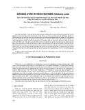 Nhân nhanh in vitro cây trầu bà cánh phượng (Philodendron xanadu)