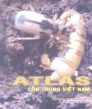 Tập 1: Côn trùng gây hại và thiên địch của chúng trên cây thực phẩm - Atlas côn trùng Việt Nam: Phần 1