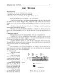 Bài giảng Mô phôi: Ống tiêu hóa