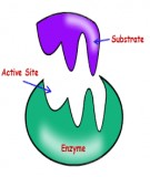 Phân loại enzyme