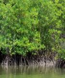 Nghiên cứu cơ chế tác động giảm sóng của rừng ngập mặn khu vực Hải Phòng
