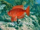 Bài giảng Sinh thái cá: Phần 1