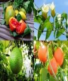 Hóa học thực phẩm: Tìm hiểu về màu gấc