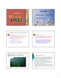 Bài giảng Địa lý sinh vật Việt Nam: Chương VII - GV. Châu Thị Thu Thủy