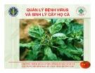 Chương trình huấn luyện nông dân sản xuất và xây dựng mô hình rau an toàn theo hướng GAP: Bệnh virus quan trọng hại họ cà